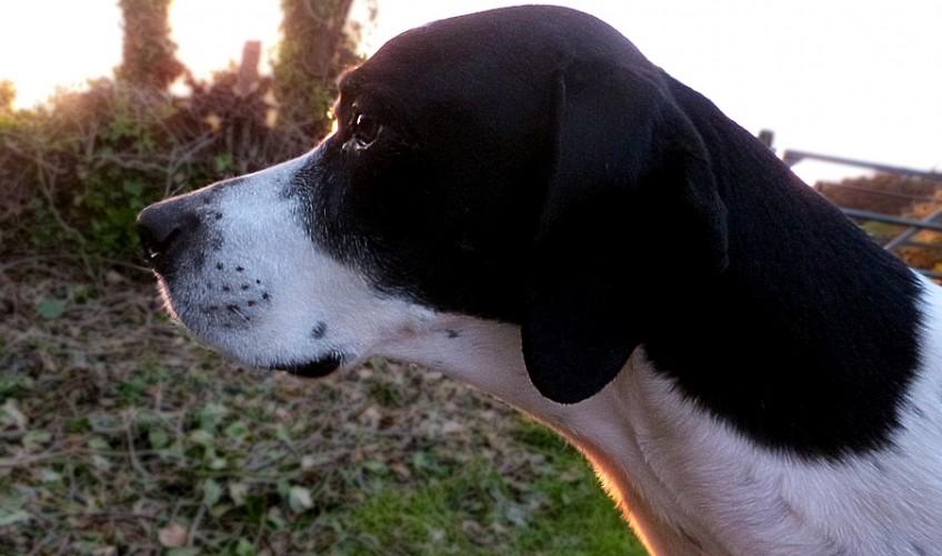 dog-91