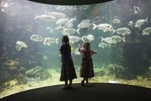 Anglesey Sea Zoo