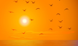 Birds Flying Across Sunset