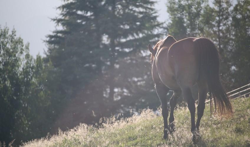 snowdonia-horses