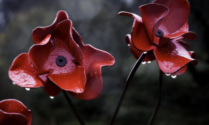 caernarfon-poppies