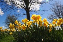 tyn-spring-offer