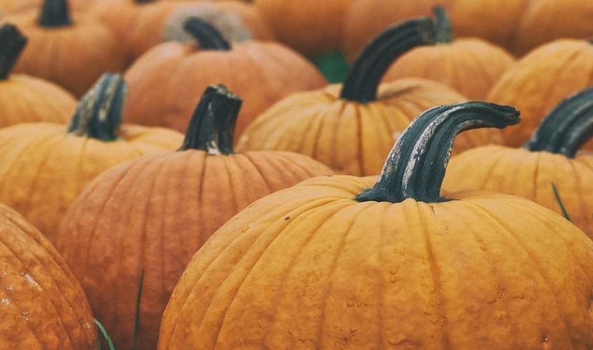 halloween caernarfon