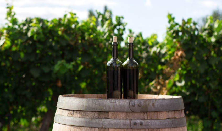 vineyard snowdonia